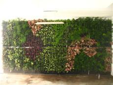 垂直绿化墙