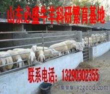 北京哪有卖小尾寒羊的