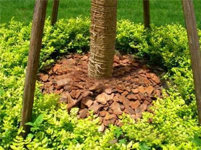 园林绿化花坛树池覆盖树皮