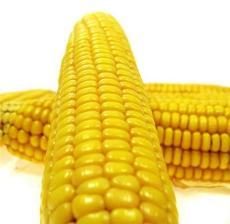 供應優質玉米