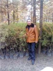 江苏枇杷种子供应商