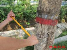 樹木生長錐生產廠家