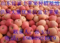 山东红富士苹果价格 山东红富士苹果供应