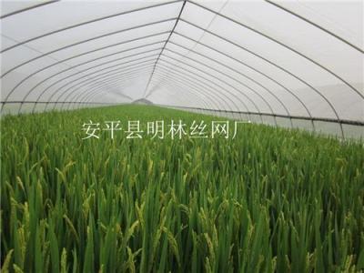 防虫网/水产防虫网
