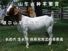 安徽波爾山羊活羊多少錢