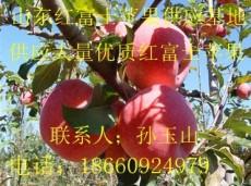 山东红富士产地在哪 山东红富士苹果