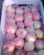 山东苹果75红富士批发才0.8