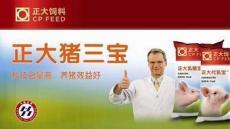 徐州猪饲料 种猪 毛猪批发厂家